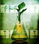 plant in beaker
